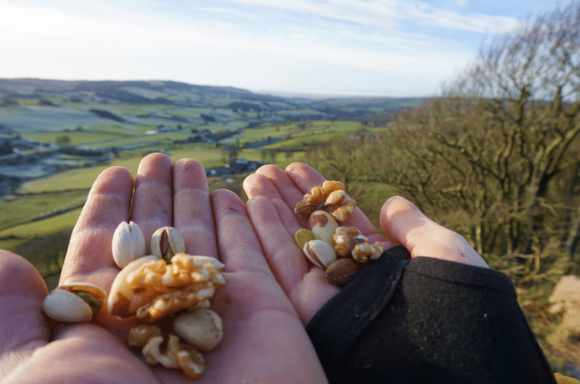 Best Nuts For Hiking