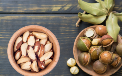 macadamia nuts vs Brazil nuts: Health benefits and Uses