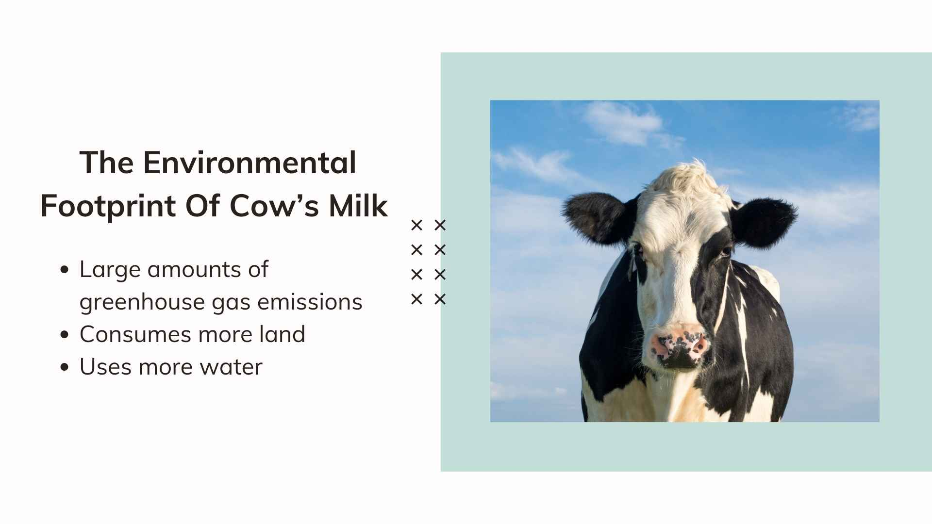 The Environmental Footprint Of Cow's Milk