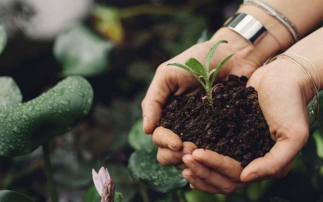 Environmental Benefits Of Plant-based Milk