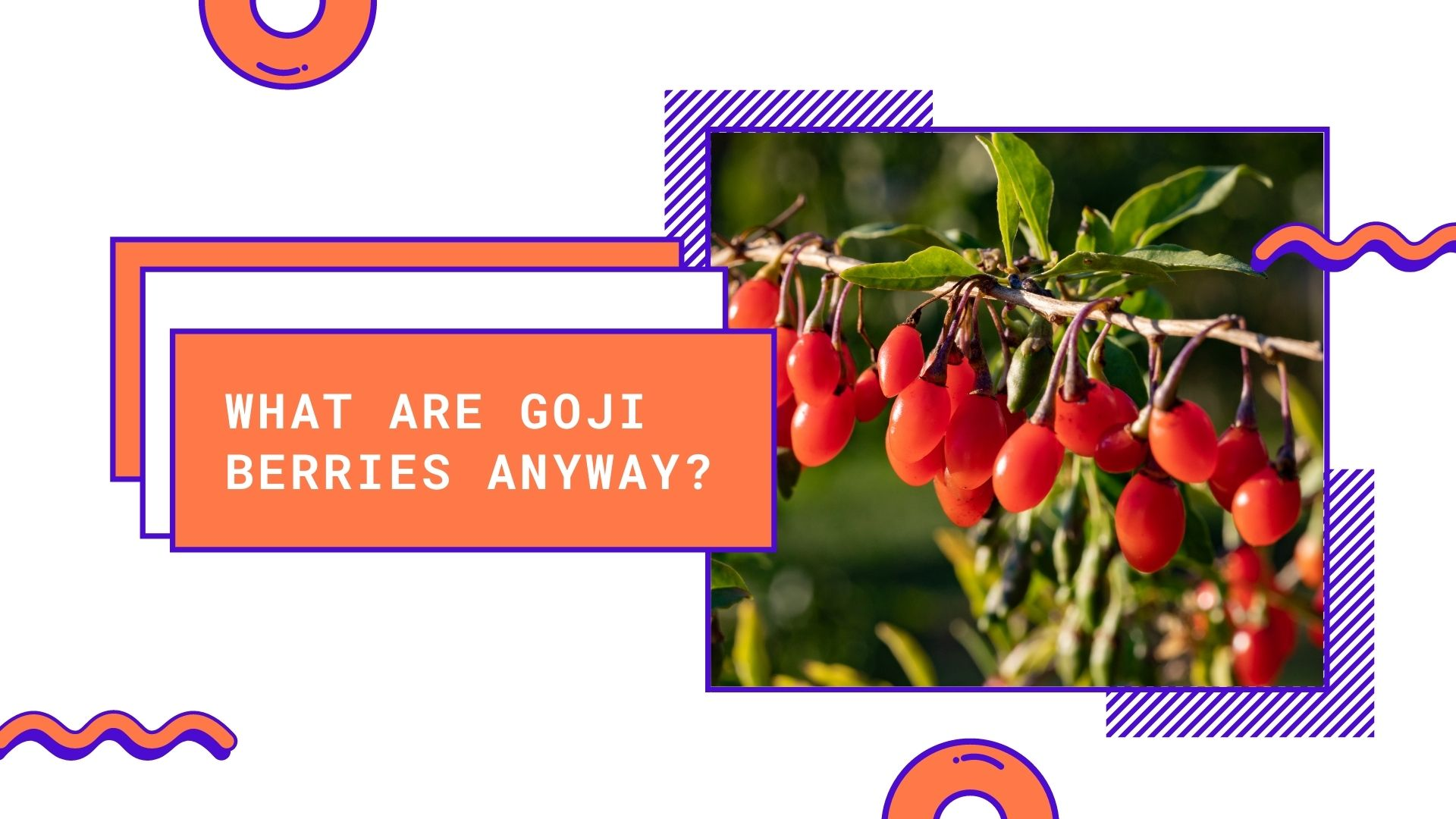 what are goji berries anyway