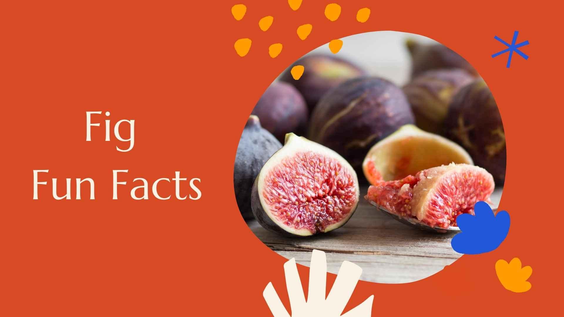 fig fun facts