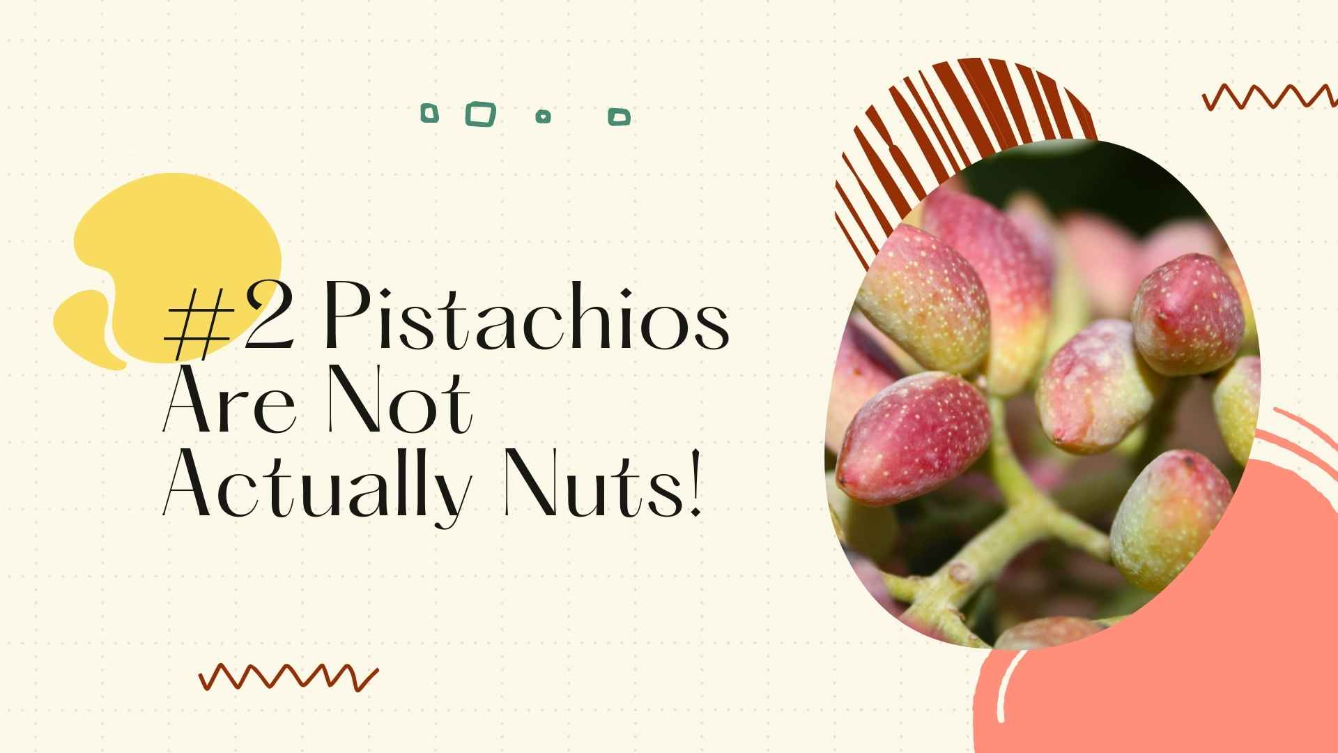 pistachios are not nuts fruits
