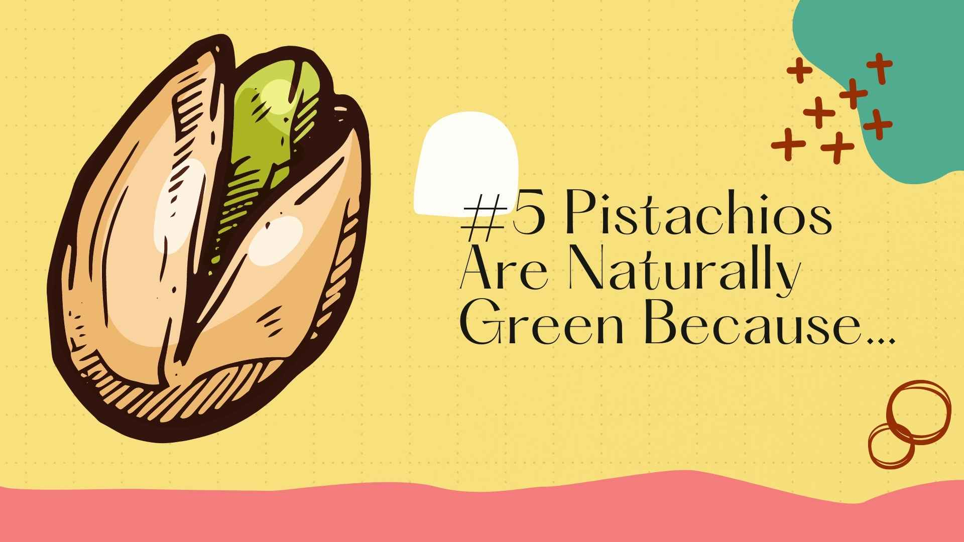 pistachios are green chlorophyll